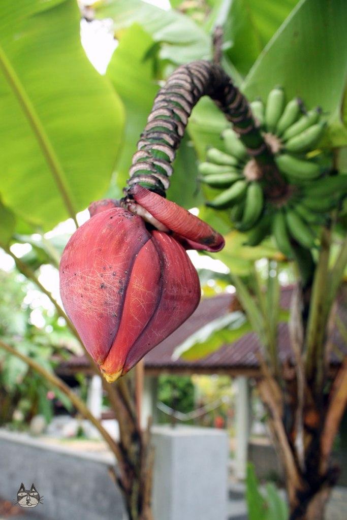 bananablossom01